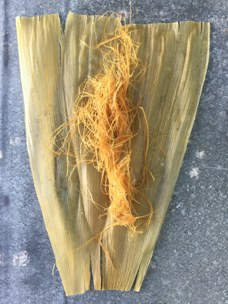 Two stages of corn husk preparation. The full corn husk has been cooked and still wet. The threaded fibers are the result of being processed in the hollander pulp beater.